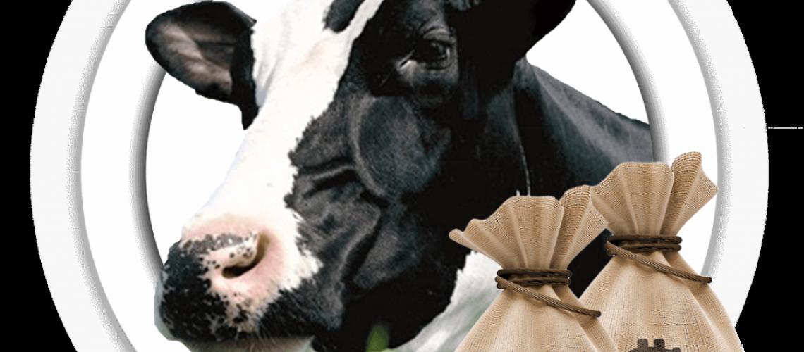 Vaca-1024x1013